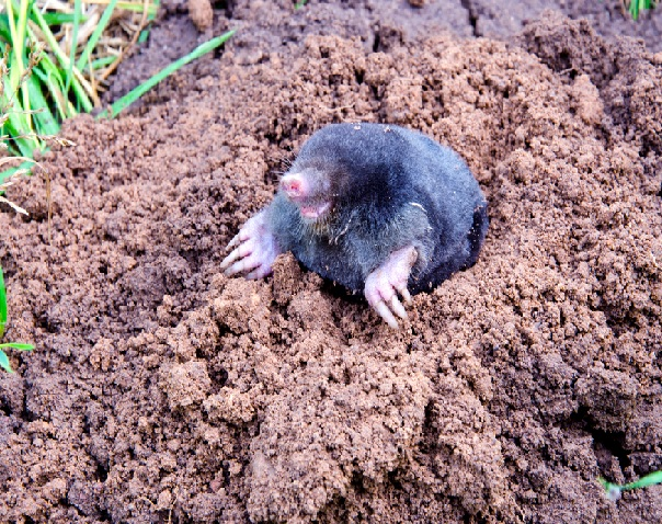 mole-removal-dordogne