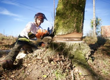 Roots & Shoots – Tree Surgeons